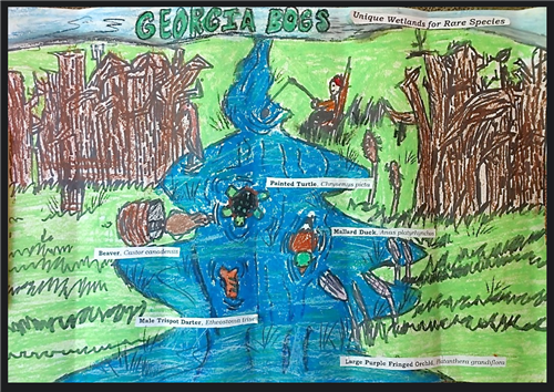 Students Place in Wildlife Conservation Poster Contest